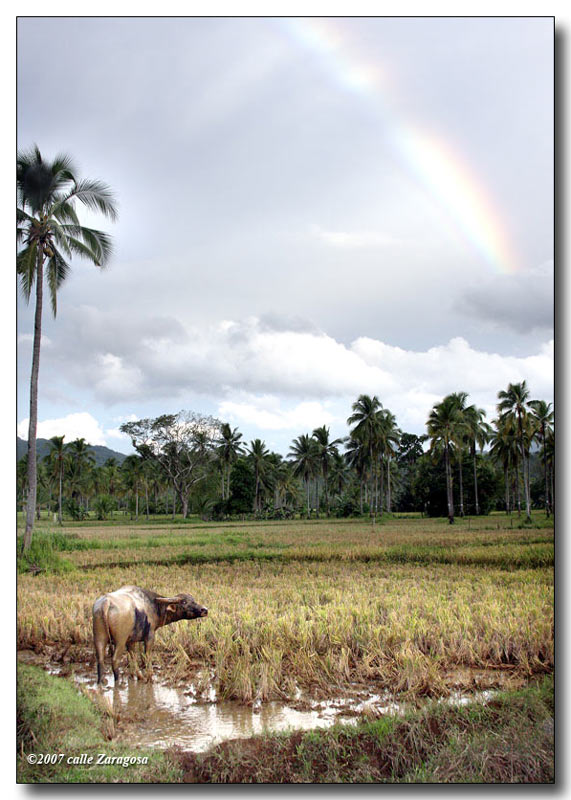 img_0644w - Travels Across Southern Leyte - Philippine Photo Gallery