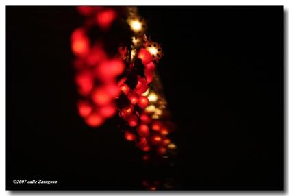 xmaslights-w-3527.jpg